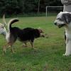 Barnie, Maddie, Sheepdog_00001