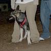 CALI (shepherd pup)_00003