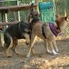 Brisco (puppy), Foxi_00002