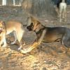 Brisco (puppy), Foxi_00006