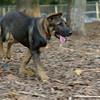 Brisco (puppy)_00001
