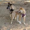 Brisco (puppy), Foxi_00004
