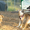 Brisco (puppy), Foxi_00009
