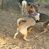 Brisco (puppy), Foxi_00007