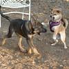Brisco (puppy), Foxi_00008
