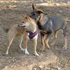 Brisco (puppy), Foxi_00005