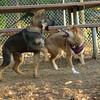 Brisco (puppy), Foxi_00001