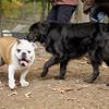 Buddy (bulldog), Shadow (girl)_00001
