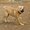 GRACIE (puppy)_00001