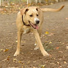 GRACIE (puppy)_00004