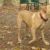 GRACIE (puppy)_00003