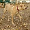 GRACIE (puppy)_00002