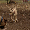 GRACIE (puppy)_00005