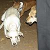 Ivy (puppy), Maddie_00001