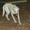 IVY (puppy girl)_00002