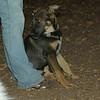 BRISCO (puppy boy)_00001