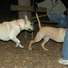 Kobe ( new), Gracie (pup)_00001