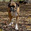 LILY (boxer)_00004