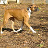 LILY (boxer)_00003