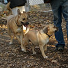 Bear (girl), Rocky (puggle)_00001