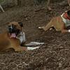 Buddy, Ruby 2 (boxers)_00002