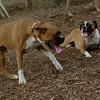 Buddy, Ruby 2 (boxers)_00003