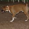 BUDDY (boxer)_00005