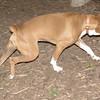 BUDDY (boxer)_00007