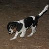 GENERAL (puppy)_00008
