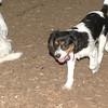 GENERAL (puppy)_00004