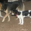 GENERAL (puppy)_00007