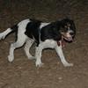 GENERAL (puppy)_00009