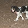 GENERAL (puppy)_00006