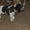 GENERAL (puppy)_00011