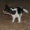 GENERAL (puppy)_00010
