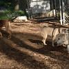 Bella (puppy), Shila_00002