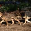 BELLA (puppy), Maddie_00001
