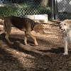 Bella (puppy), Shila_00001
