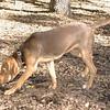 BELLA (new puppy)_00001