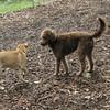 COCO, gracie (puppy)_00001