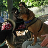 Charlie (new), PACO (minpin)_00001