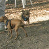 Charlie (new), PACO (minpin)_00002