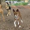 charley (dingo), maddie, lenny_00001