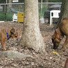 Charlie (new), Maggie (pup)_00001