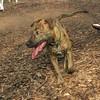 ARIES (puppy)_00003