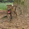 ARIES (puppy)_00006