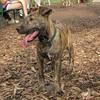 ARIES (puppy)_00005