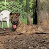 ARIES (puppy)_00011