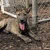 ARIES (puppy)_00013