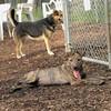 ARIES (puppy)_00008